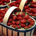 Как вырастить вкусную клубнику в теплице