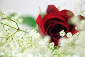 Красноречивей слов – цветы