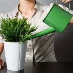 Хорошие методы удобрить домашние растения