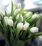 Какие цветы дарить на Восьмое марта?