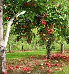 Как превратить свой сад в райское место?