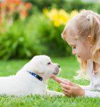Приобретаем своему ребенку собаку. Что нужно знать?