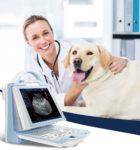 Разнообразие оборудования для ветеринарии